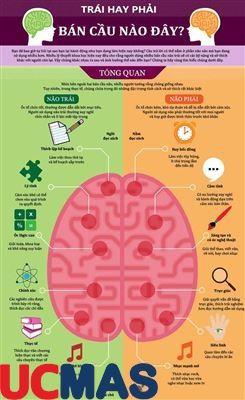 Giải mã 2 bán cầu não